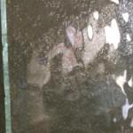verre clair cathédrale